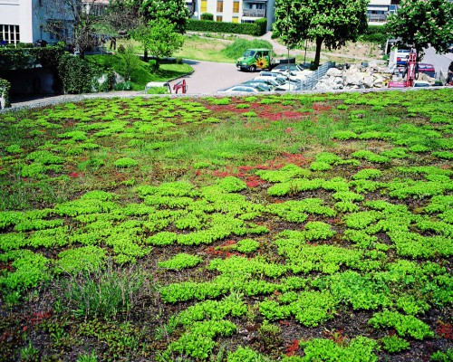 green-roofing-sarnavert